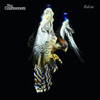 The Courteeners: Falcon