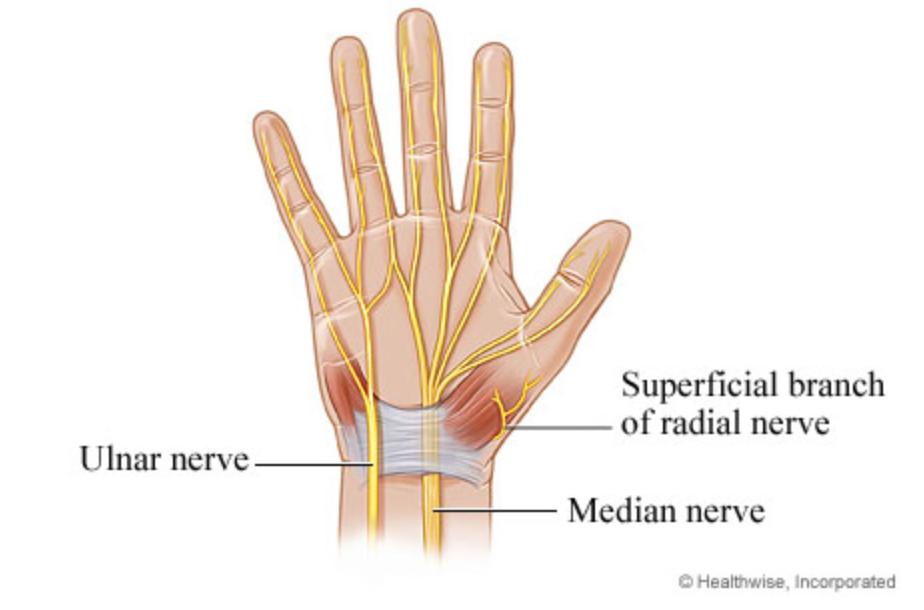 Нервы в руке